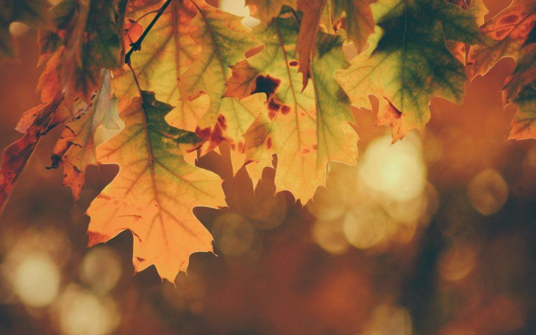 Gardez la forme, c'est l'automne !