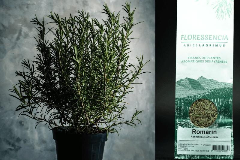 Tisane : Les bienfaits des plantes médicinales